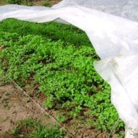 Агроволокно 30 г/кв.м на сайте biopreparaty.biz.ua